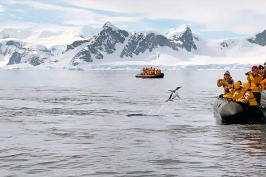 pingüino rescate
