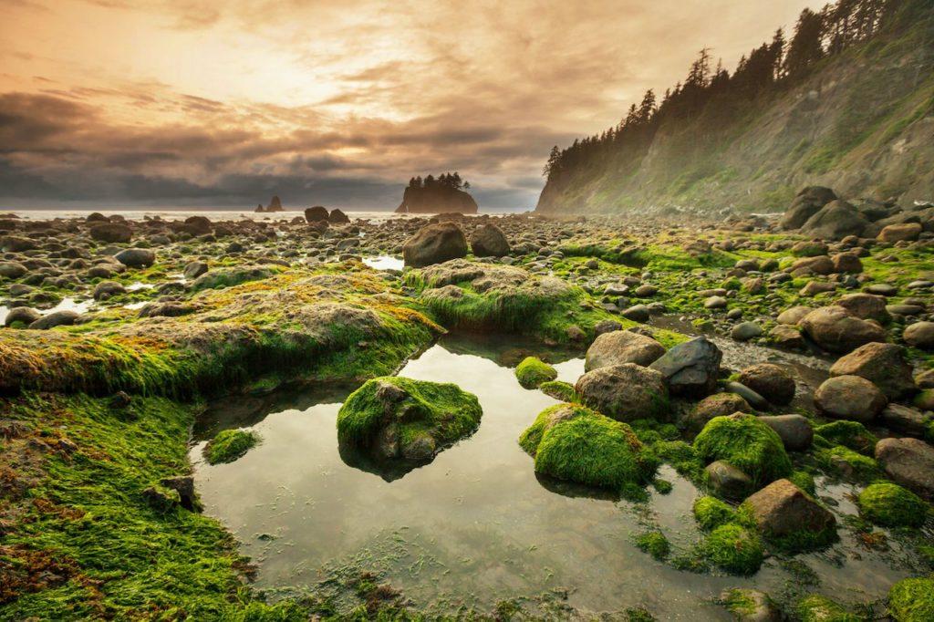 parques nacionales más visitados de Estados Unidos Olympic National park