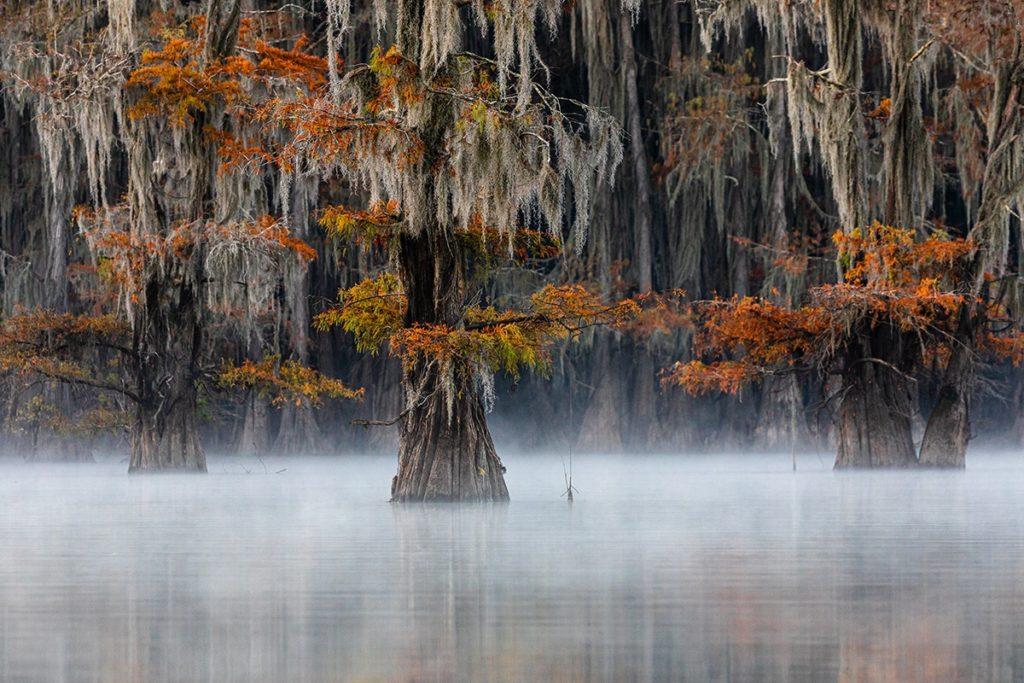 Imagen World Nature Photography Awards 2020 Estas Son Las Fotos Ganadoras De Los World Nature Photography Awards 2020 Un Ano Donde La Naturaleza Encontro Su Maximo Esplendor 6