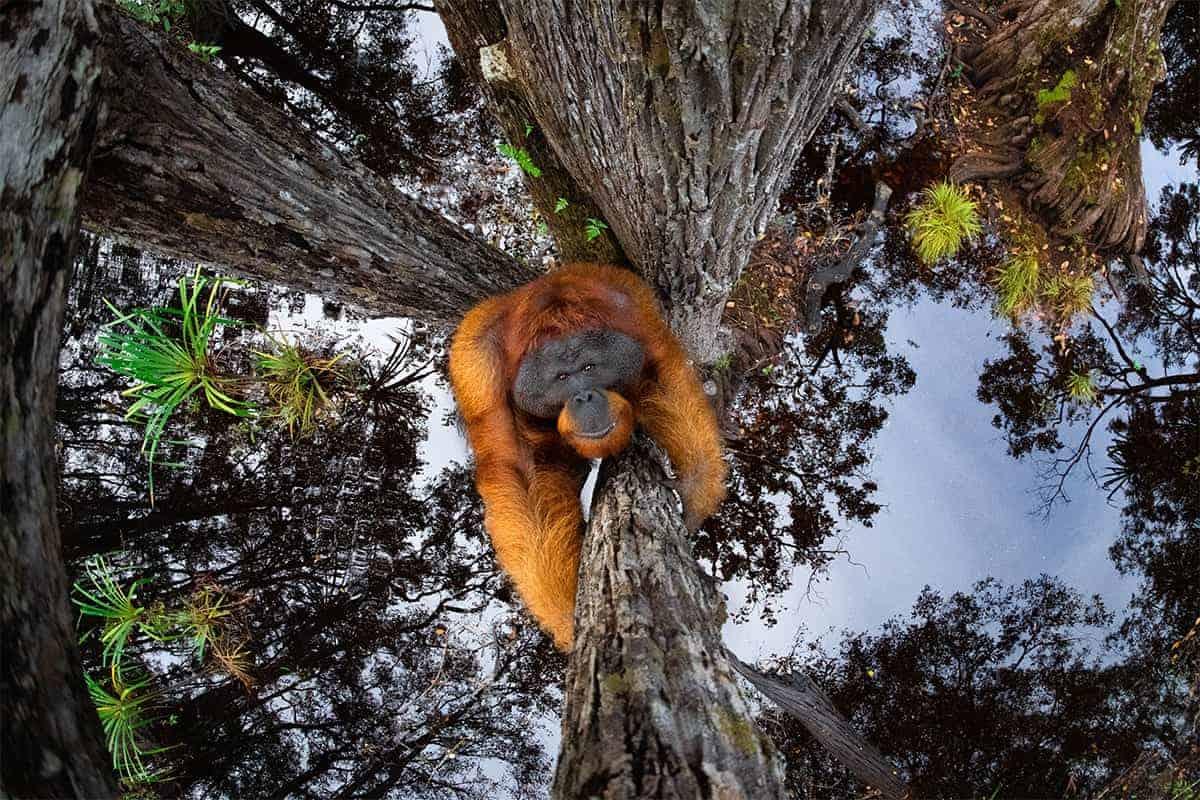 Estas son las fotos ganadoras de los World Nature Photography Awards 2020, un año donde la naturaleza encontró su máximo esplendor 0