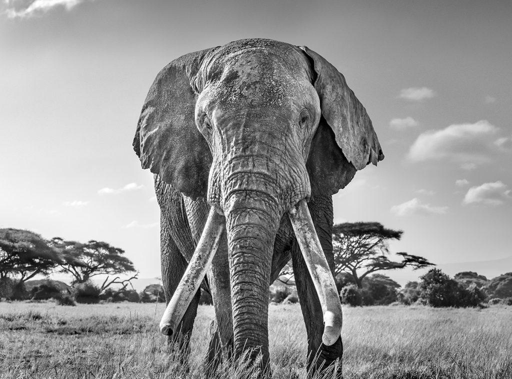 Imagen World Nature Photography Awards 2020 Estas Son Las Fotos Ganadoras De Los World Nature Photography Awards 2020 Un Ano Donde La Naturaleza Encontro Su Maximo Esplendor 9