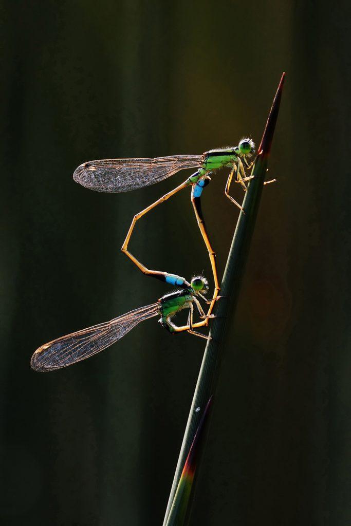 Imagen World Nature Photography Awards 2020 Estas Son Las Fotos Ganadoras De Los World Nature Photography Awards 2020 Un Ano Donde La Naturaleza Encontro Su Maximo Esplendor 7