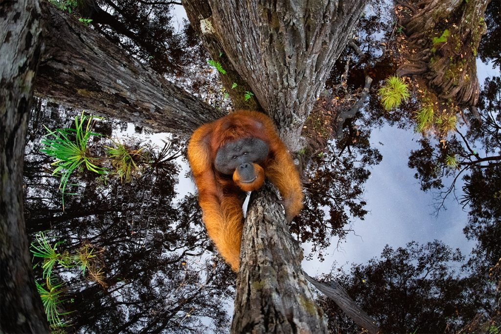 Estas Son Las Fotos Ganadoras De Los World Nature Photography Awards 2020, Un Año Donde La Naturaleza Encontró Su Máximo Esplendor