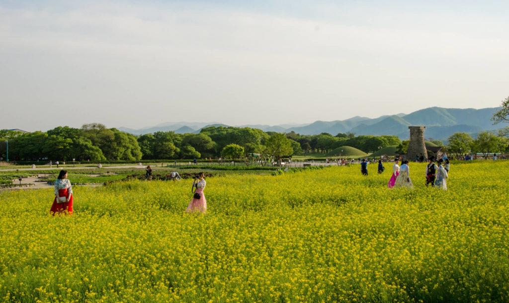 lugares que visitar en Corea del Sur 34119219720 995d395163 k 1