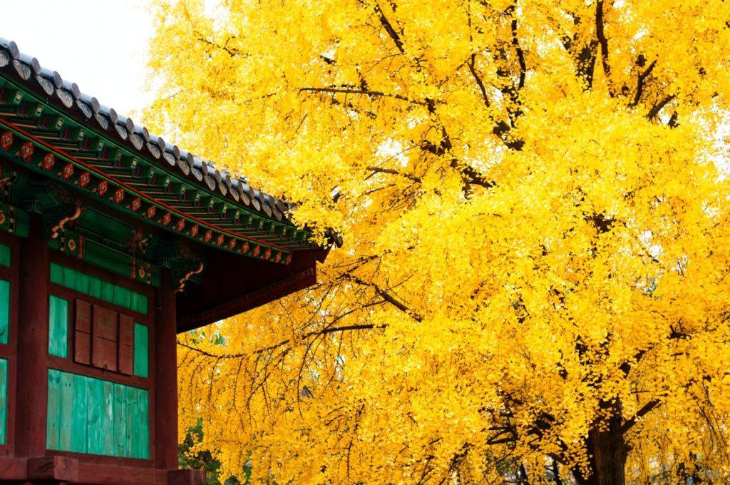 lugares que visitar en Corea del Sur na visky Xi3zFNJRwQc unsplash 1