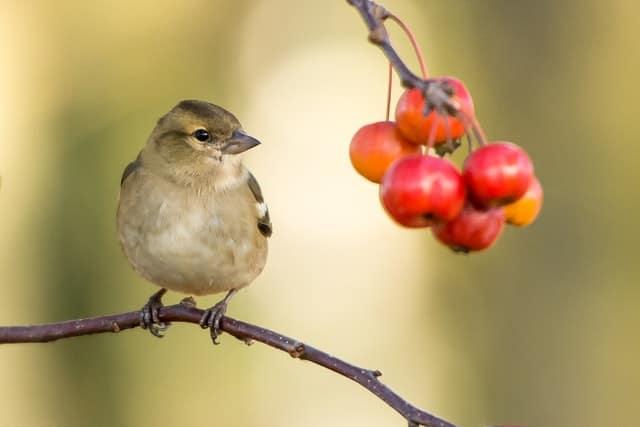 Un Estudio Sostiene Que Rodearse De Pájaros Puede Contribuir A Estar Más Feliz