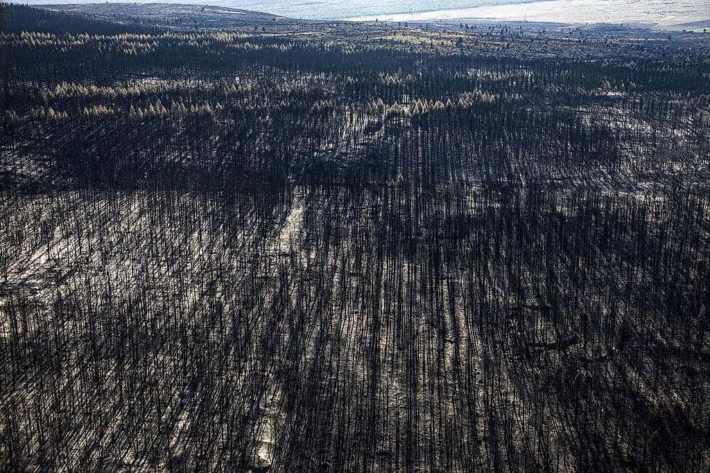 Incendios en la Patagonia argentina 3