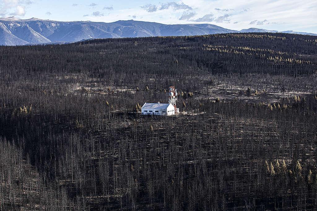 Imagen Incendios En La Patagonia Argentina Incendios En La Patagonia Argentina 6