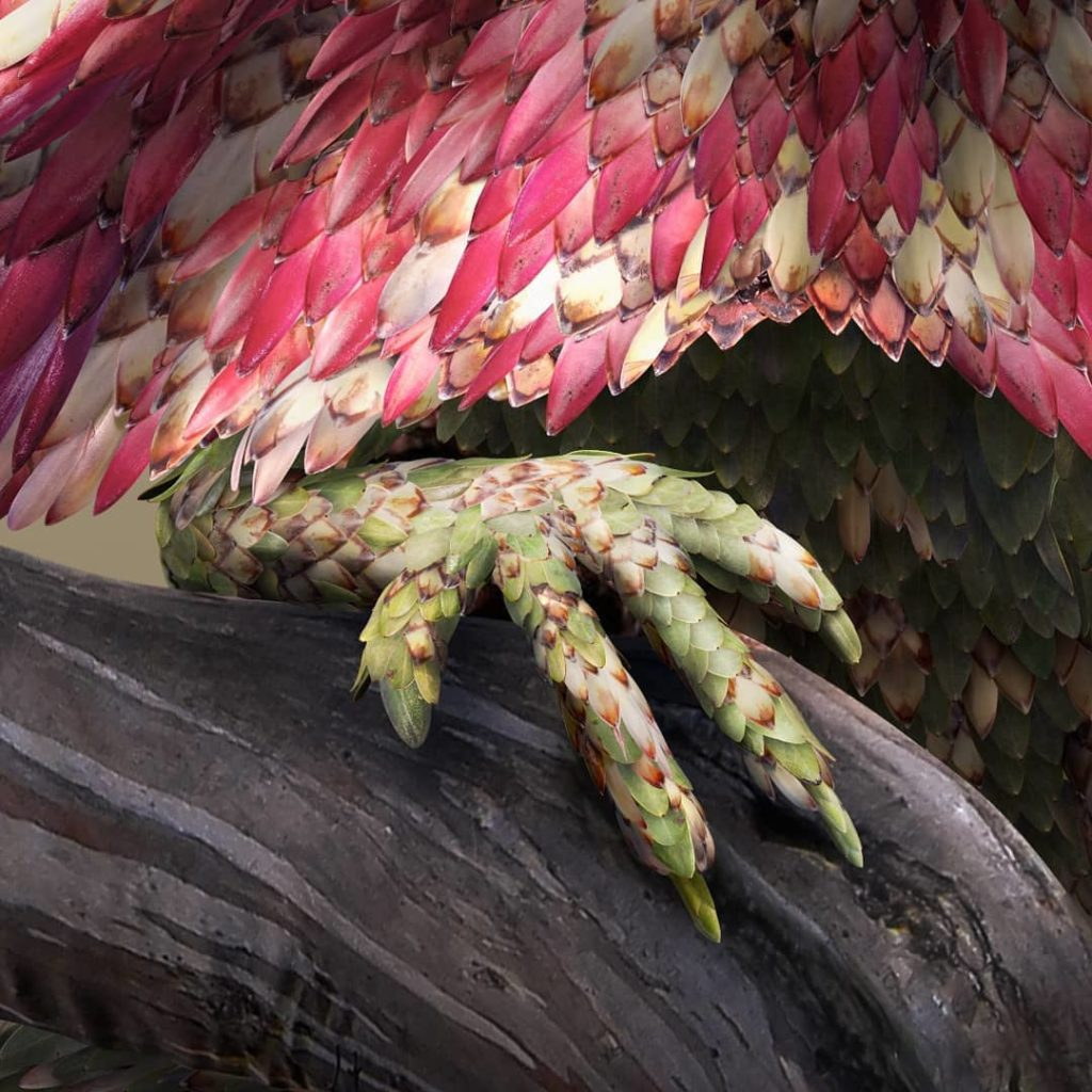 retratos de animales flower petal leaf animals josh dykgraaf 19