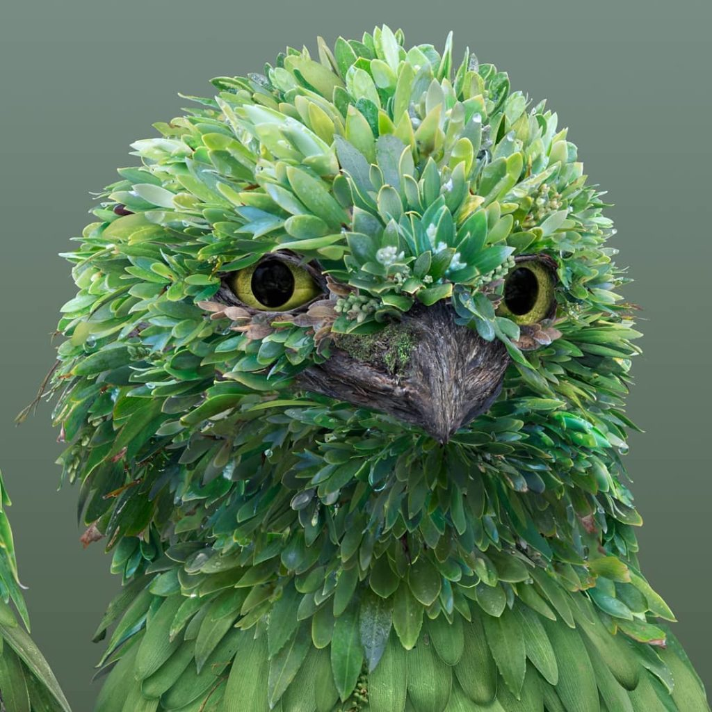 retratos de animales flower petal leaf animals josh dykgraaf 4 1