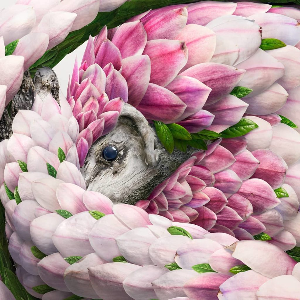 retratos de animales flower petal leaf animals josh dykgraaf 9