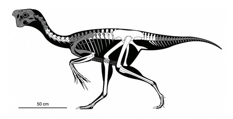 imagen fósil de un dinosaurio fossil oviraptorid theropod 12