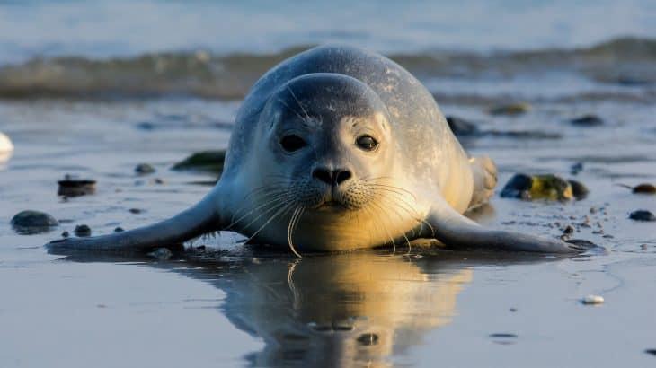Nuevo estudio sostiene que al menos el 25% de los mamíferos marinos van camino a la extinción
