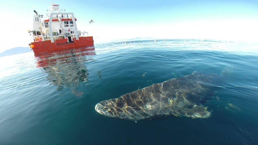 tiburón vivo más viejo del mundo