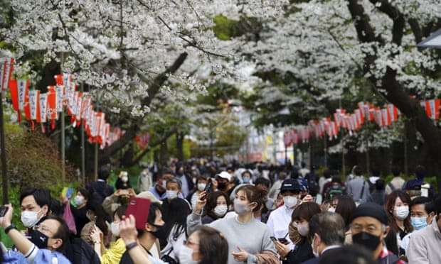 Los Cerezos De Japón Florecieron En La Fecha Más Temprana Del Último Tiempo Y Puede Estar Relacionado Al Cambio Climático