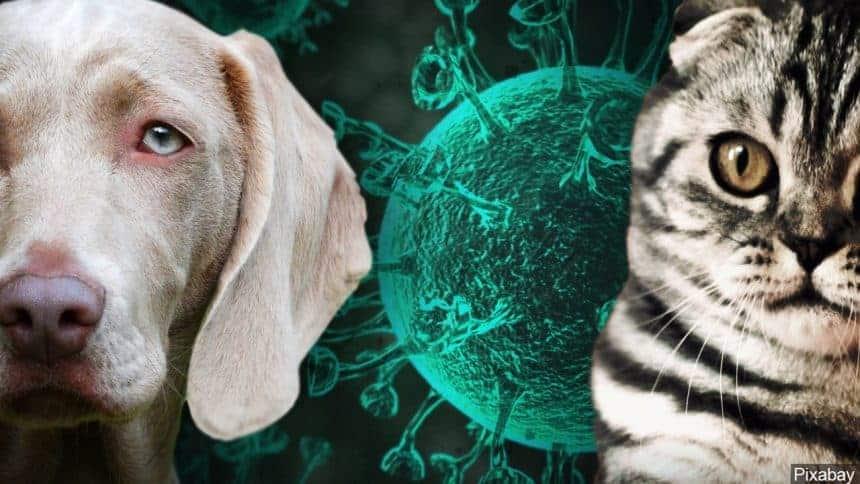 vacuna contra el COVID-19 para animales