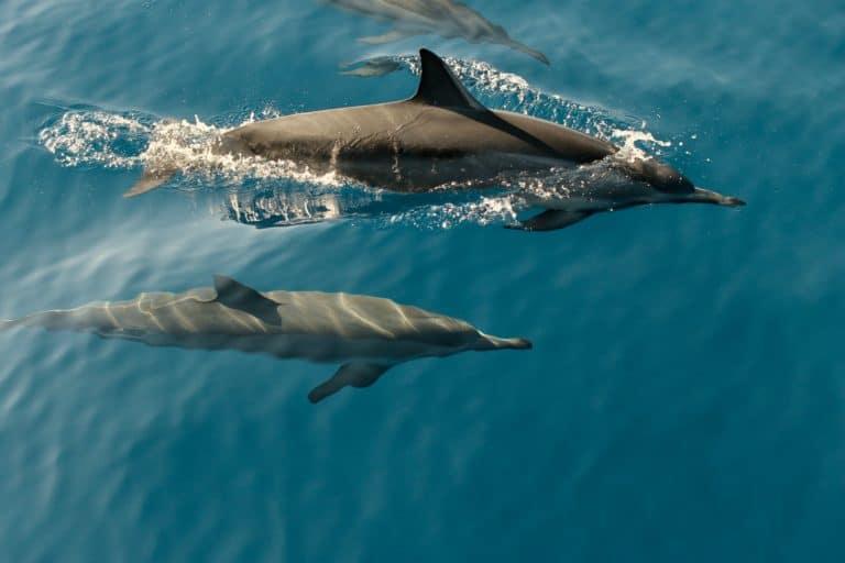 Cientos de delfines aparecieron muertos en las costas de Ghana y están investigando las causas