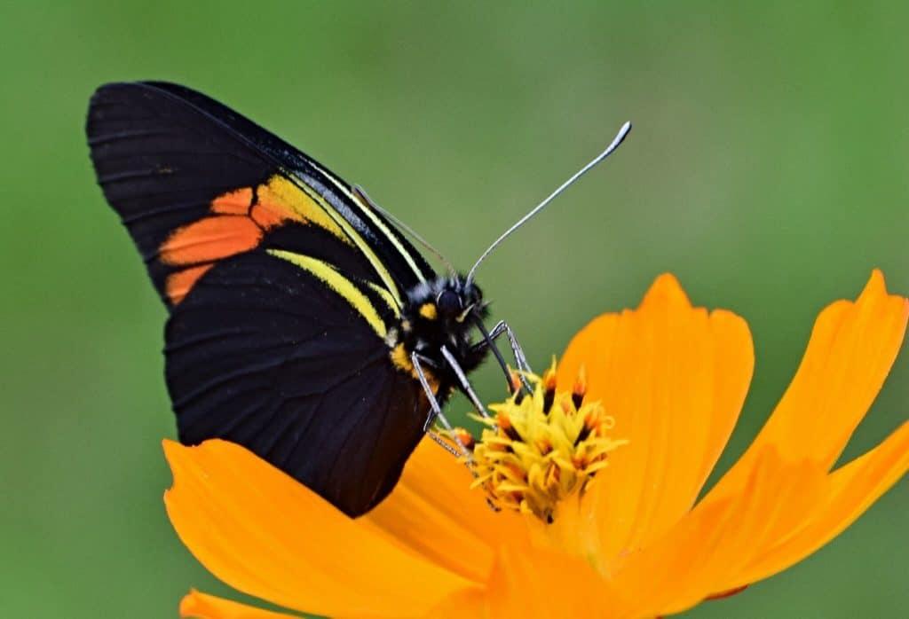 Imagen Jardines De Mariposas 35584452663 Ce74Bc9E32 K 1