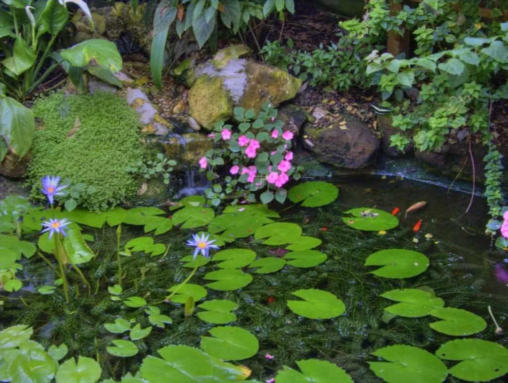 Imagen Jardines De Mariposas 3686938522 B0Aec296B8 K 1