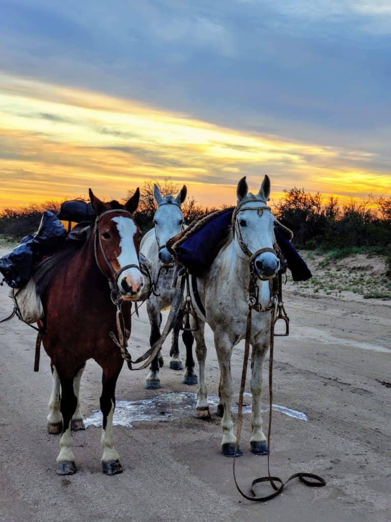 imagen recorrer Argentina a caballo IMG 20200930 070006 2 1