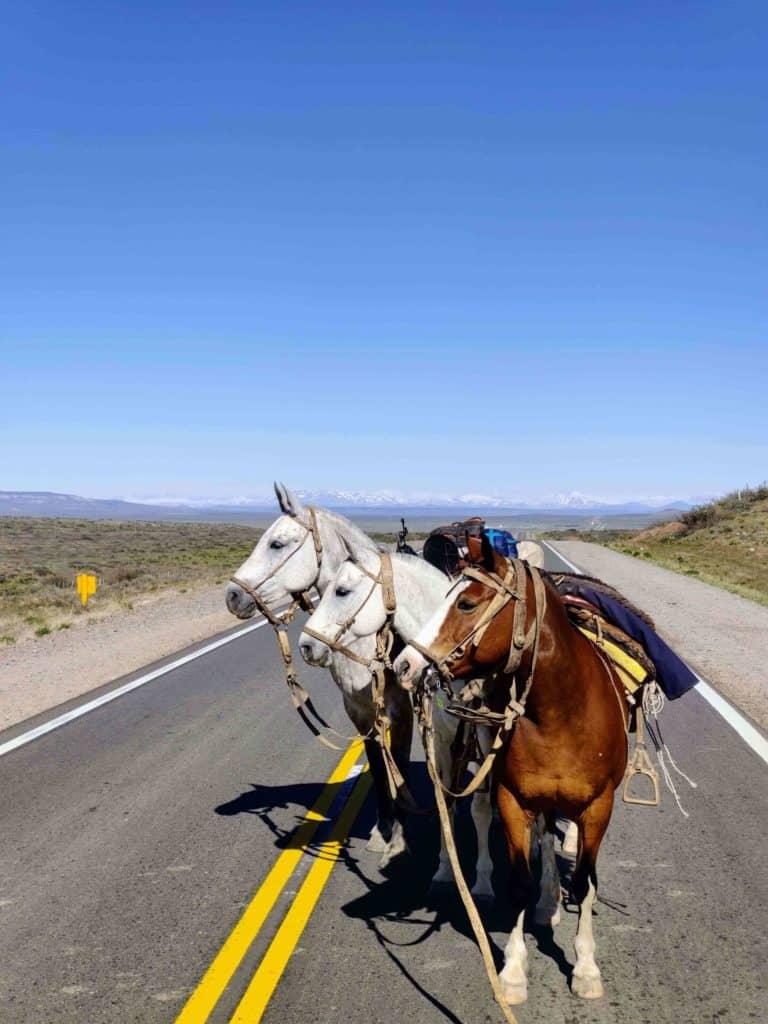 La pandemia lo empujó a cumplir el sueño de recorrer Argentina a caballo: una historia a rienda suelta en pleno confinamiento