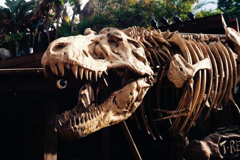 Un nuevo estudio reveló que la Tierra estuvo habitada por un total de 2.5 mil millones de tiranosaurios rex