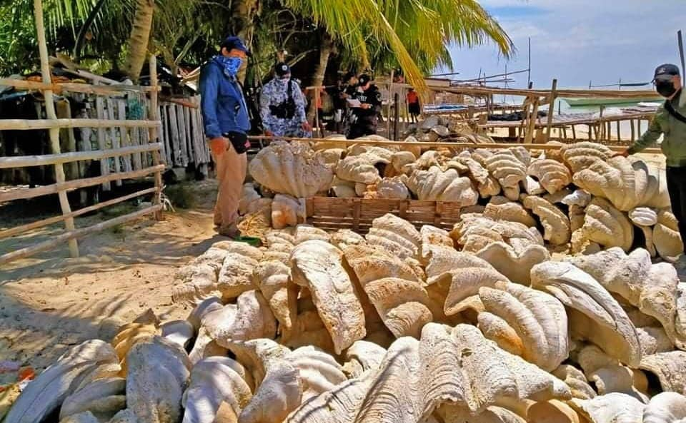 Autoridades de Filipinas incautaron fósiles de conchas de almejas gigantes con un valor equivalente a 25 millones de dólares