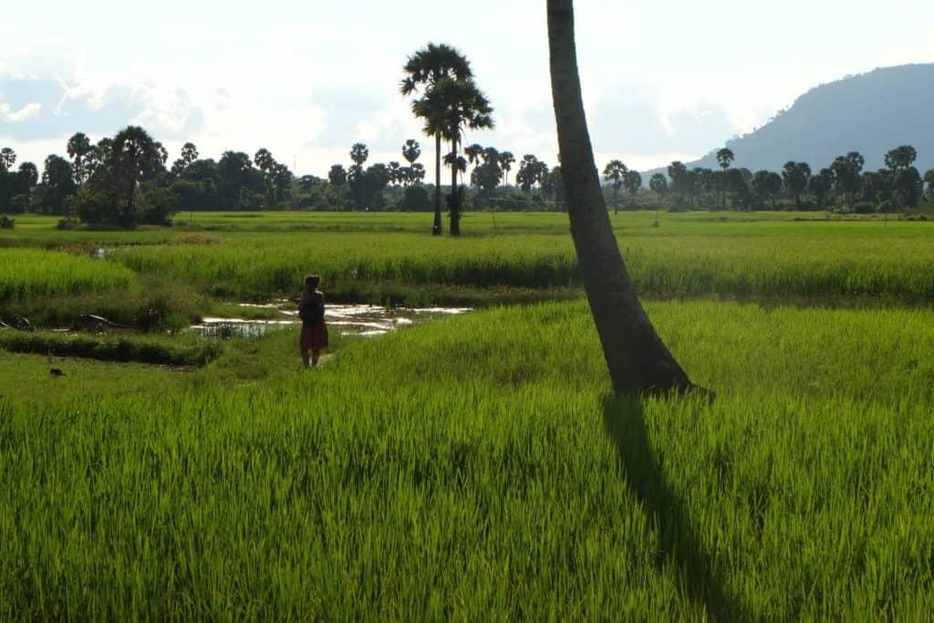 imagen Kampot boudewijn huysmans yu9TA2Mk3Pw unsplash 1