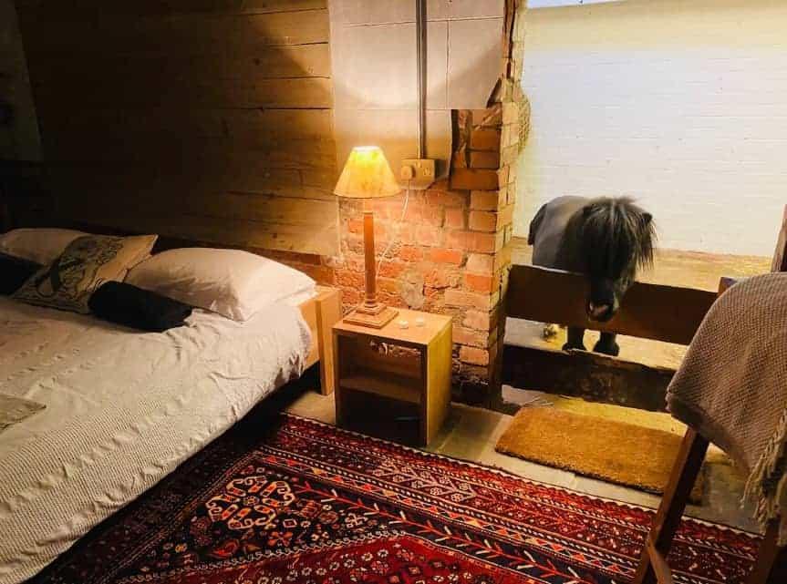 Este atractivo Airbnb en una granja del siglo XVII en Nottinghamshire ofrece la compañía nocturna de un pony Shetland en miniatura
