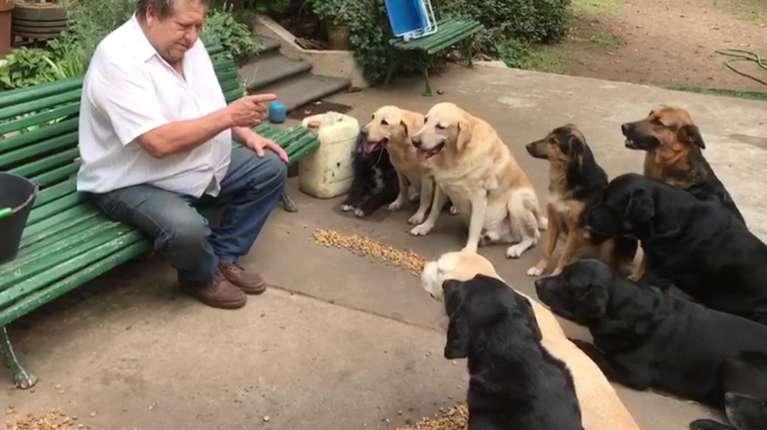 adiestrador-perros-en-roque-perez