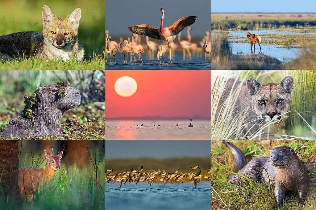 Greenpeace Argentina Busca Apoyo Para Pedir Por La Creación Del Parque Nacional Terrestre Más Grande Del País