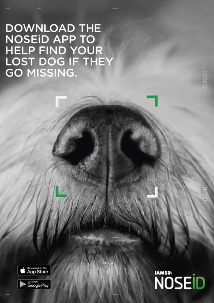 Crean Noseid, Una Aplicación Que Utiliza La Tecnología De Los Smartphones Para Identificar Perros Perdidos A Través De Su Nariz