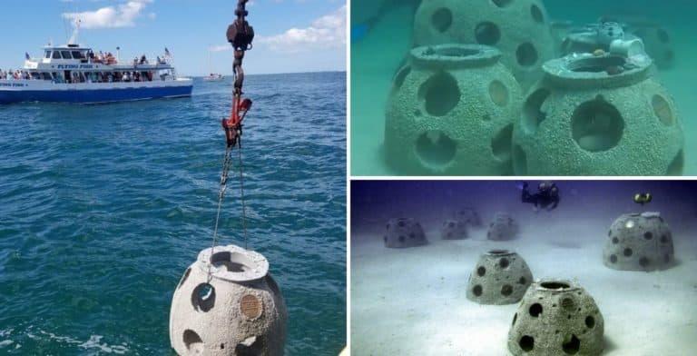 """La línea costera de Florida se está recuperando gracias a arrecifes que están hechos con la """"colaboración"""" de personas que fallecieron"""