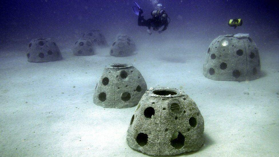 La Línea Costera De Florida Se Está Recuperando Gracias A Arrecifes Que Están Hechos Con La &Quot;Colaboración&Quot; De Personas Que Fallecieron