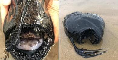 Encuentran un extraño y tenebroso pescado en las costas de California que es propio de las aguas profundas