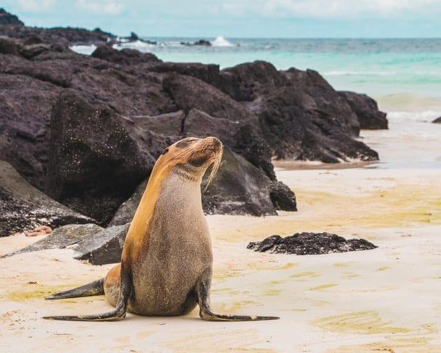 Las Islas Galápagos Es Uno De Los Parques Nacionales Más Importantes Del Planeta.