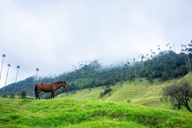 Glamping En Colombia   Valle De Cocora En Quindío, Colombia, Un Paraíso Natural Donde Crece El Árbol Nacional Palma De Cera. Imagen De Robin Noguier En Unsplash