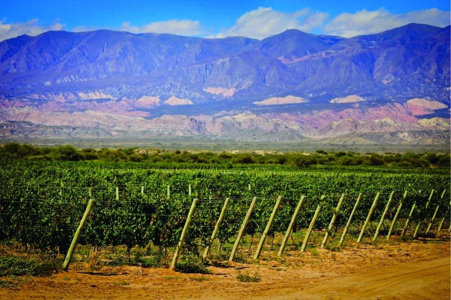 Ruta Del Vino En Tucumán
