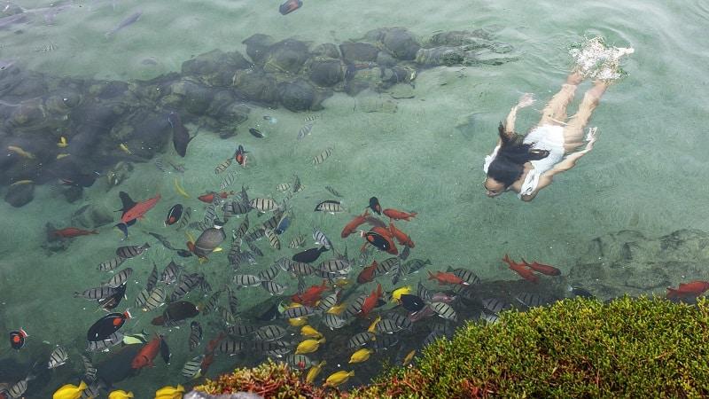 Persona Nadando En El Estanque Del Acuario