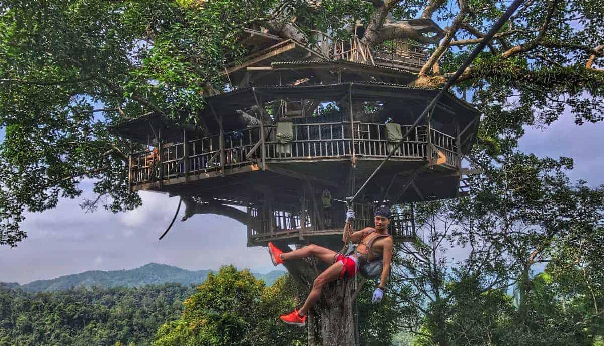 hoteles árboles selva