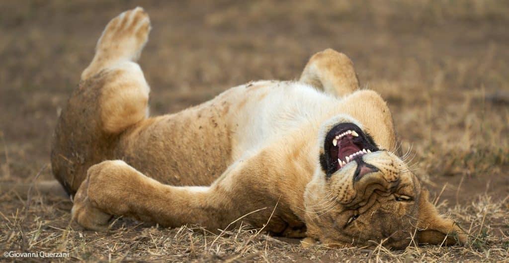 Ya está abierta la convocatoria para los premios de fotografía Comedy Wildlife Photography Awards 2021