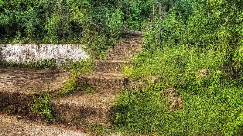 Cómo-Llegar-Al-Parque-Nacional-El-Palmar