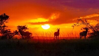 Kenia realizará el primer censo de animales silvestres, el cual contribuirá enormemente a los esfuerzos de conservación