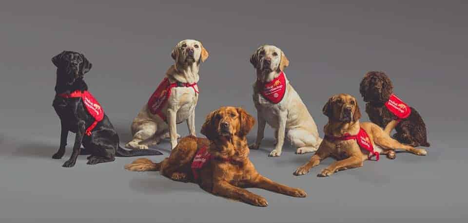perros entrenados pueden detectar Covid-19