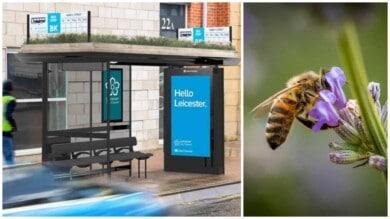 paradas de abejas