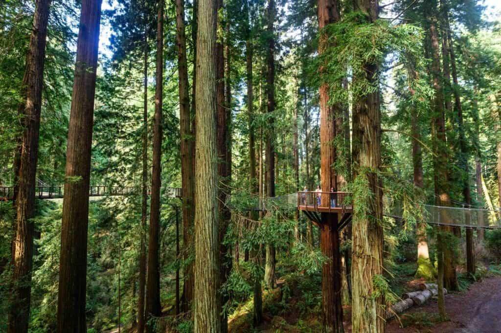 imagen Redwood Sky Walk Skywalk 124 1 1024x681 1