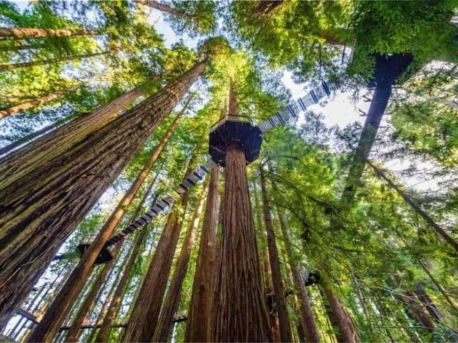 imagen Redwood Sky Walk Redwood Sky Walk atraccion en Sequoia Park Zoo