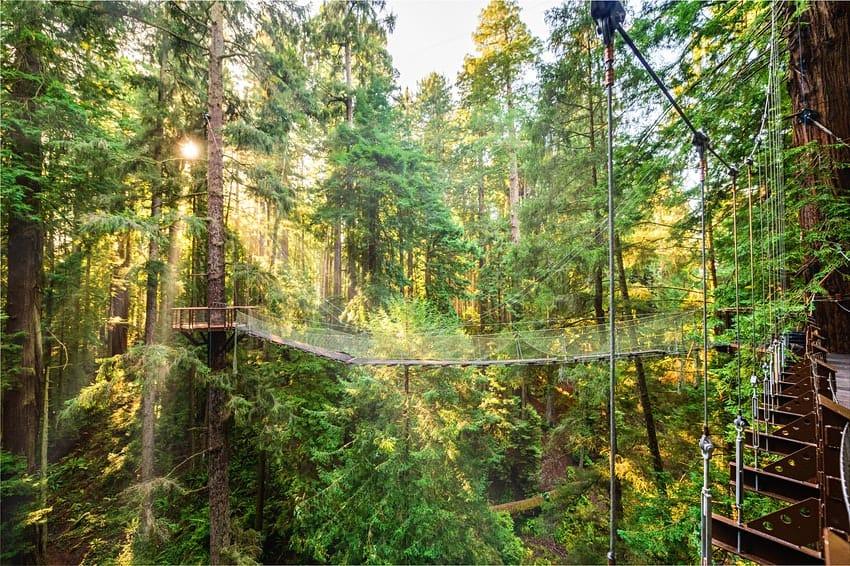 Redwood Sky Walk, la nueva atracción turística en Sequoia Park Zoo para admirar secuoyas a 30 metros del suelo