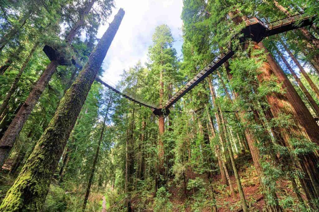 Redwood-Sky-Walk-atracción-en-Sequoia-Park-Zoo-2