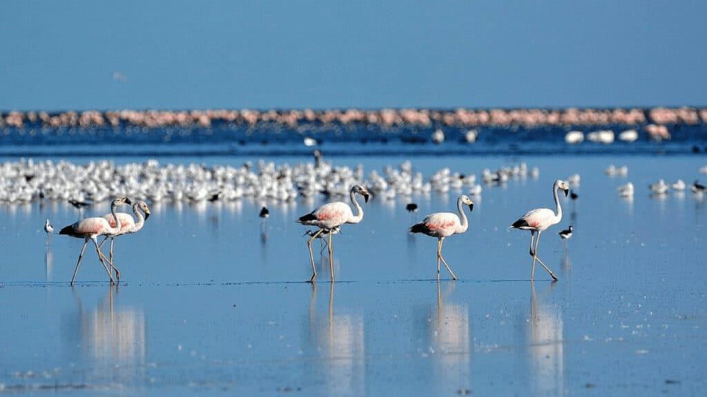 Qué Hacer En El Parque Nacional Ansenuza: 5 Actividades Para Conocer El Nuevo Área De Preservación Natural De Argentina